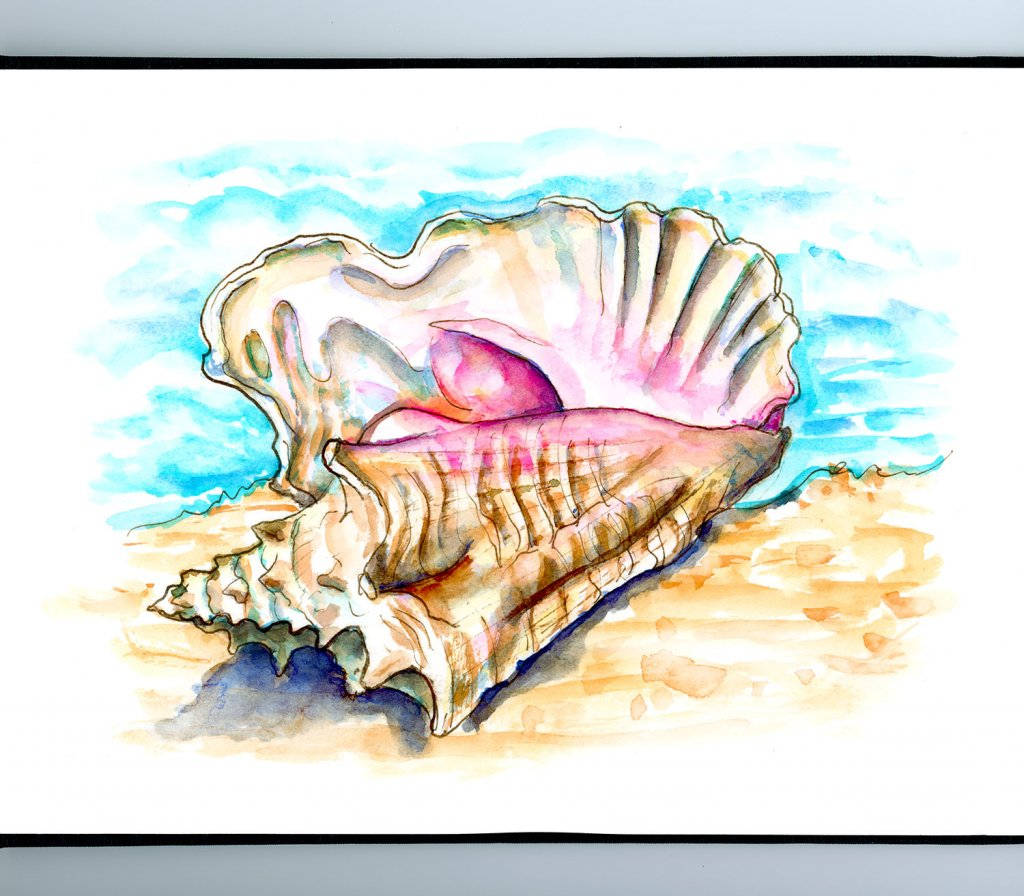 Conch Shell Beach Watercolor Illustration Sketchbook Detail