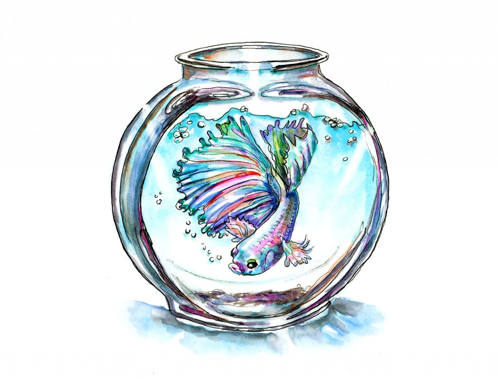 Betta Fish In Bowl Watercolor Illustration