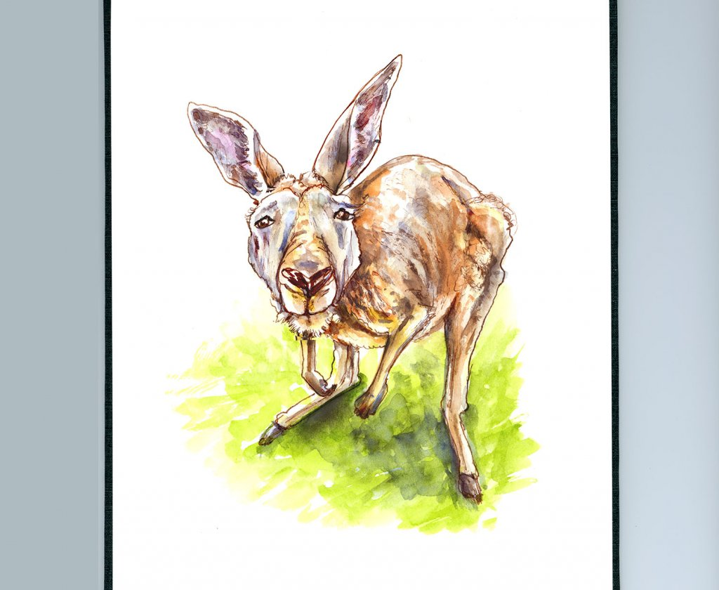 Kangaroo Curious Watercolor Illustration Sketchbook Detail