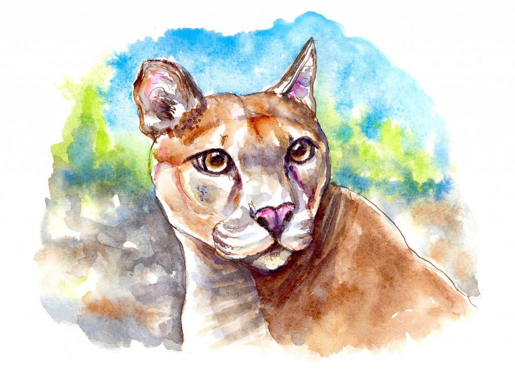 Mountain Lion Puma Watercolor Illustration