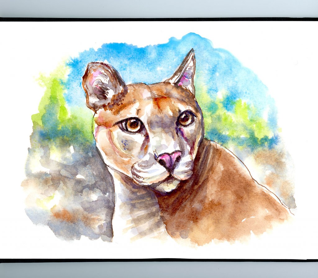Mountain Lion Puma Watercolor Illustration Sketchbook Detail