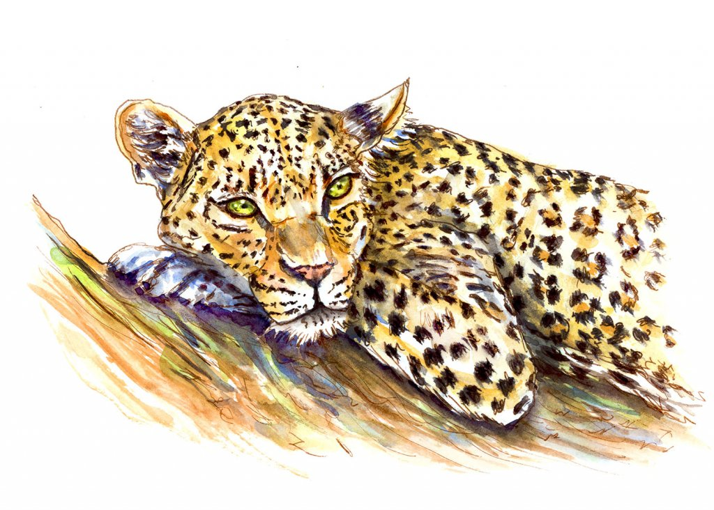 Leopard Watercolor Illustration
