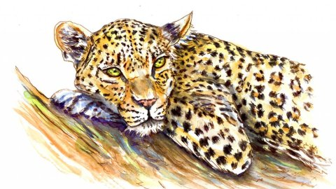 Leopard Watercolor Illustration