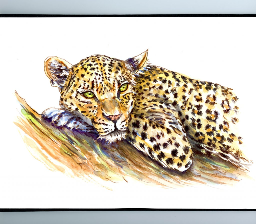 Leopard Watercolor Illustration Sketchbook Detail