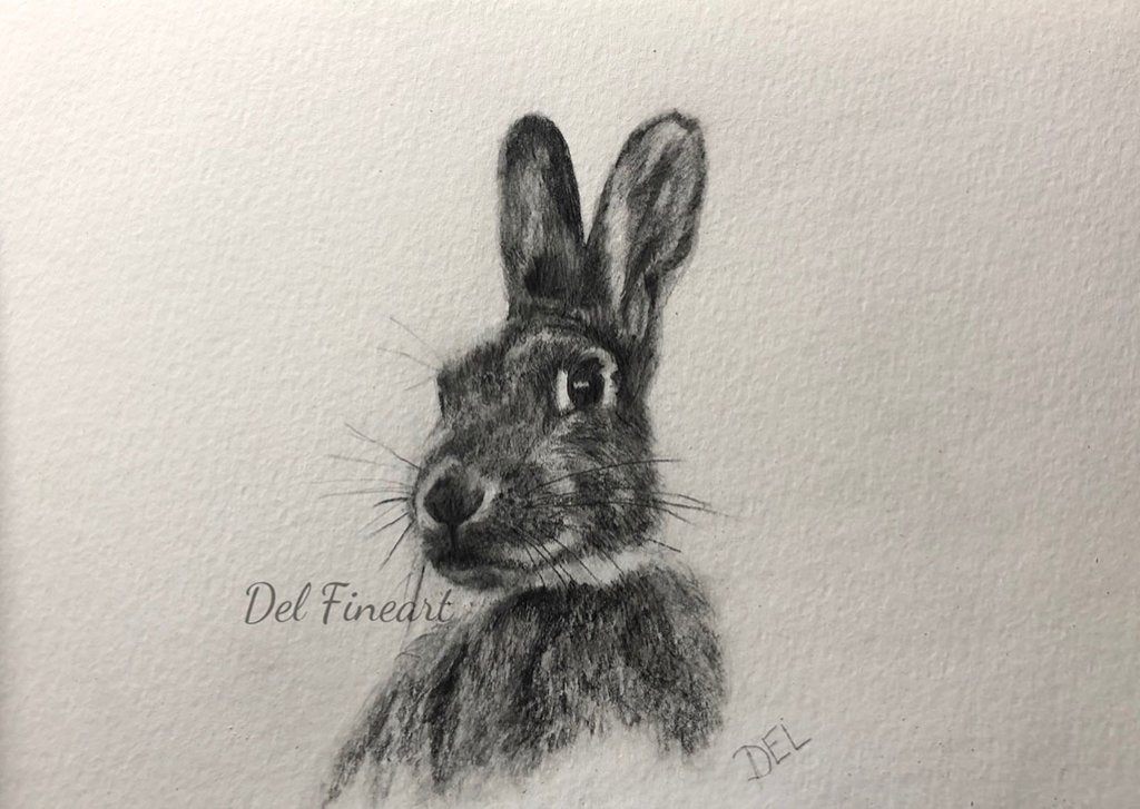 Rabbit Pencil Drawing by Del Fineart