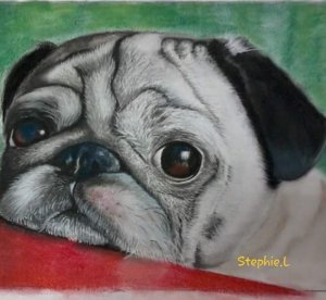 It's a pug's life Drawing in soft pastels. 20190918_120733