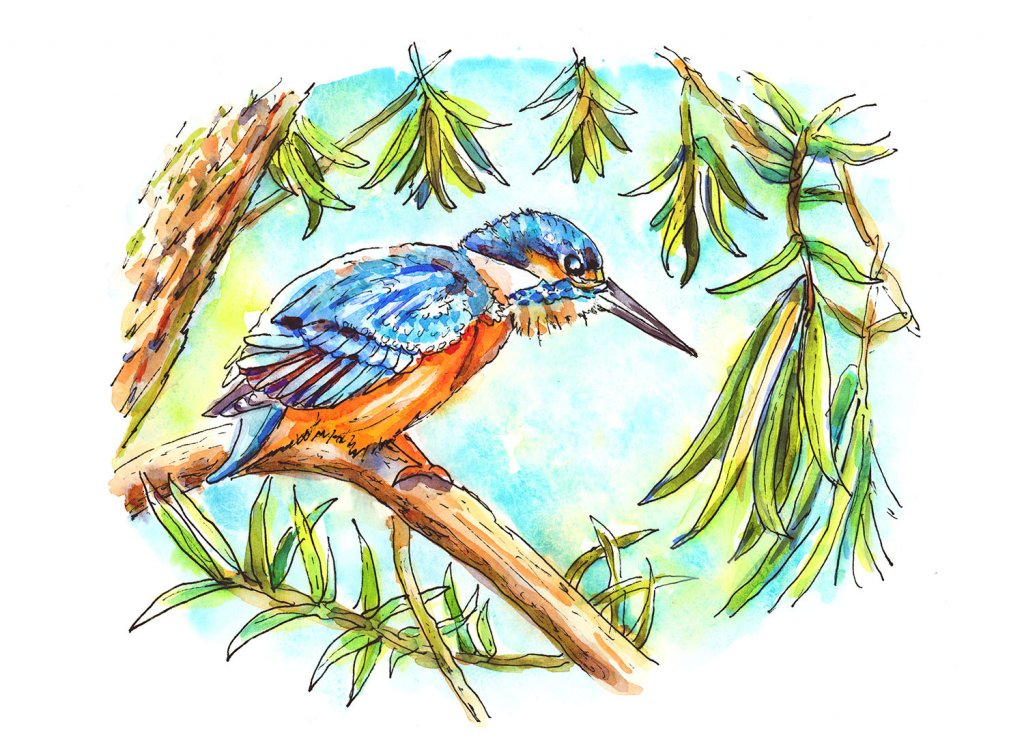 Kingfisher Birds Eye View Watercolor Illustration