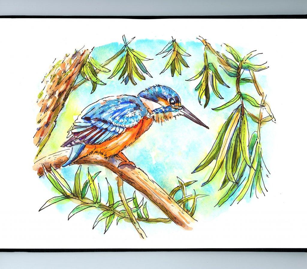 Kingfisher Birds Eye View Watercolor Illustration Sketchbook Detail