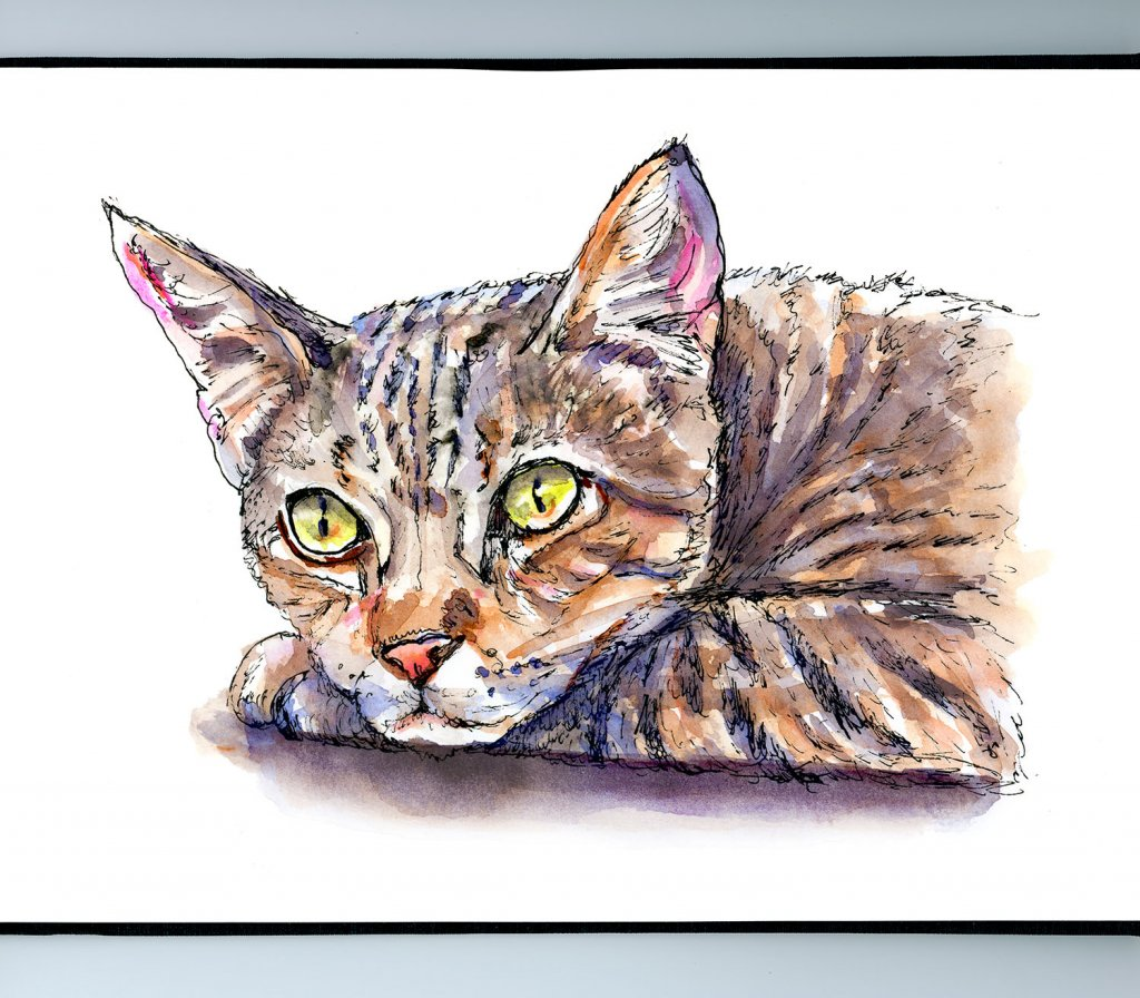 Tabby Cat Watercolor Illustration Sketchbook Detail