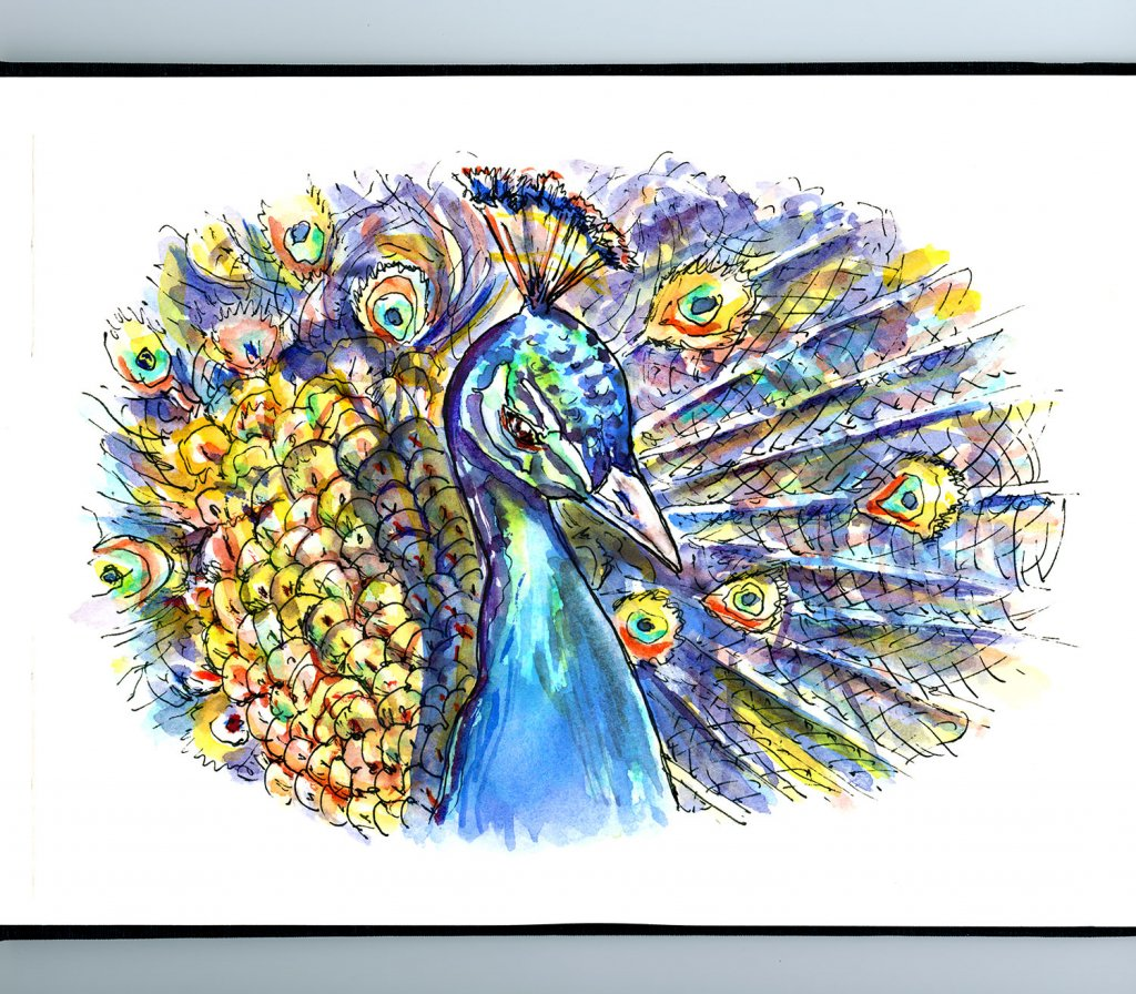Peacock Feathers Watercolor Illustration Sketchbook Detail