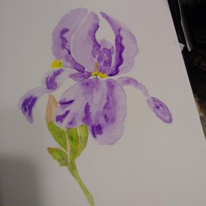 Here is the watercolor iris without sketching IMG_20190724_150400_024