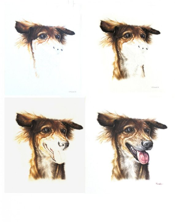 Dog Pet Portrait Work In Progress by Prasad Natarajan