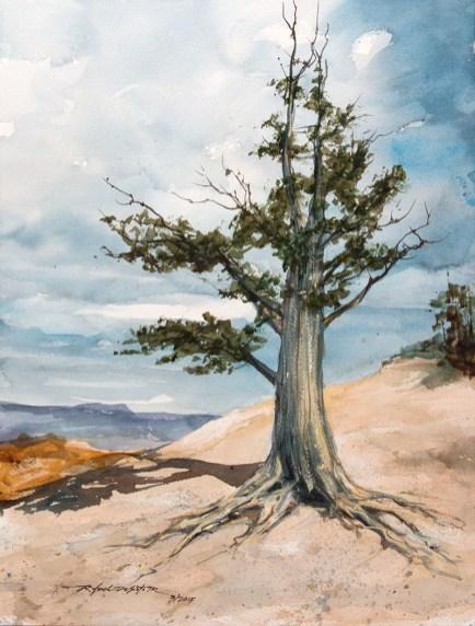Bristlecone Pine Watercolor Painting by by Rafael DeSoto Jr