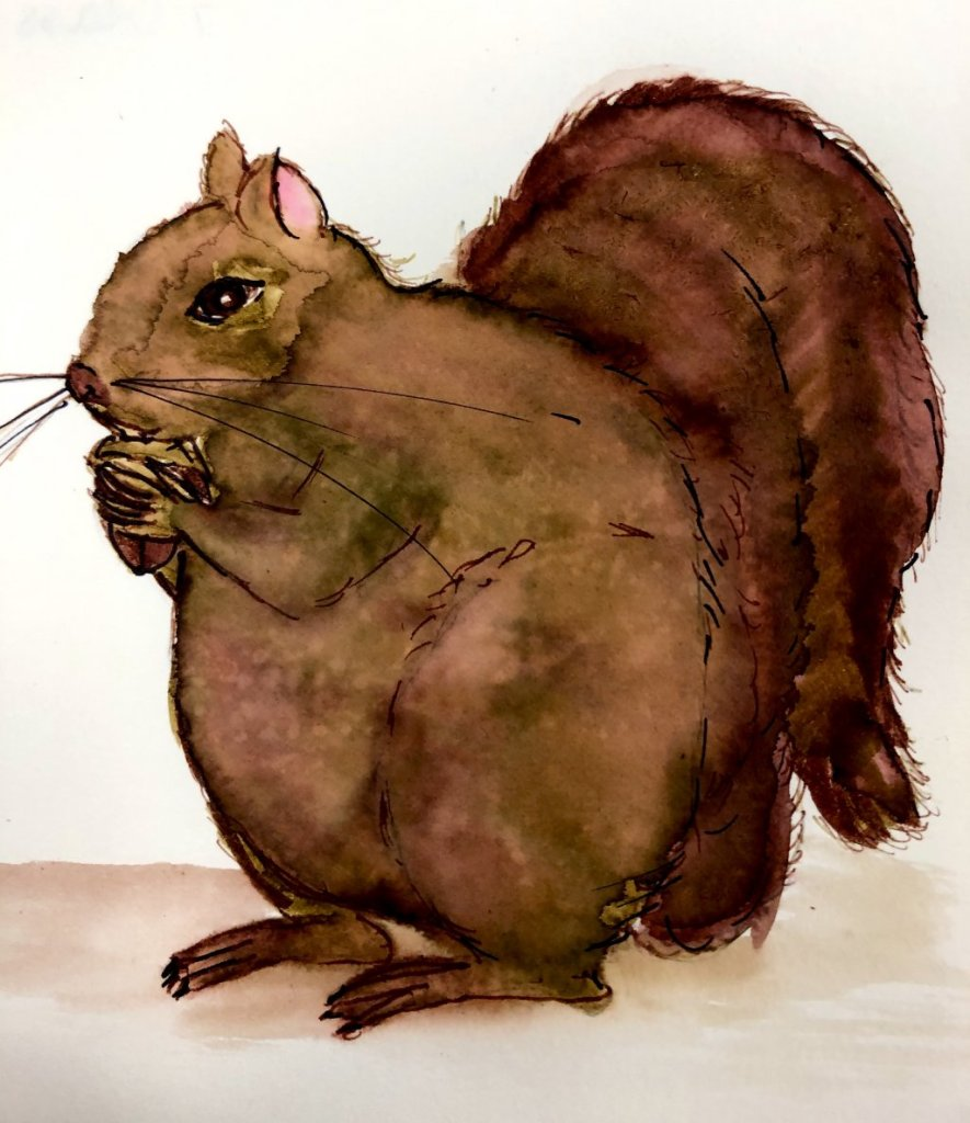 #doodlwashOctober2019 #doodlewashOctober2019AutumnFun Day 16: Squirrel! 06B3C00D-1E0E-40CD-ADD4-EDFA