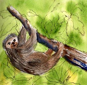 10/18/19 Sloth 10.18.19 Sloth img045