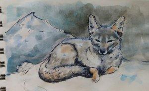 Pampas fox (A memory of my dear Patagonia :)) D11 #doodlewashOctober2019 20191011_193439