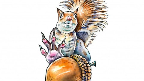 Squirrel Grabbing For Acorn Nut Watercolor Illustration
