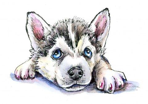 Siberian Husky Puppy Inktober Watercolor 2019