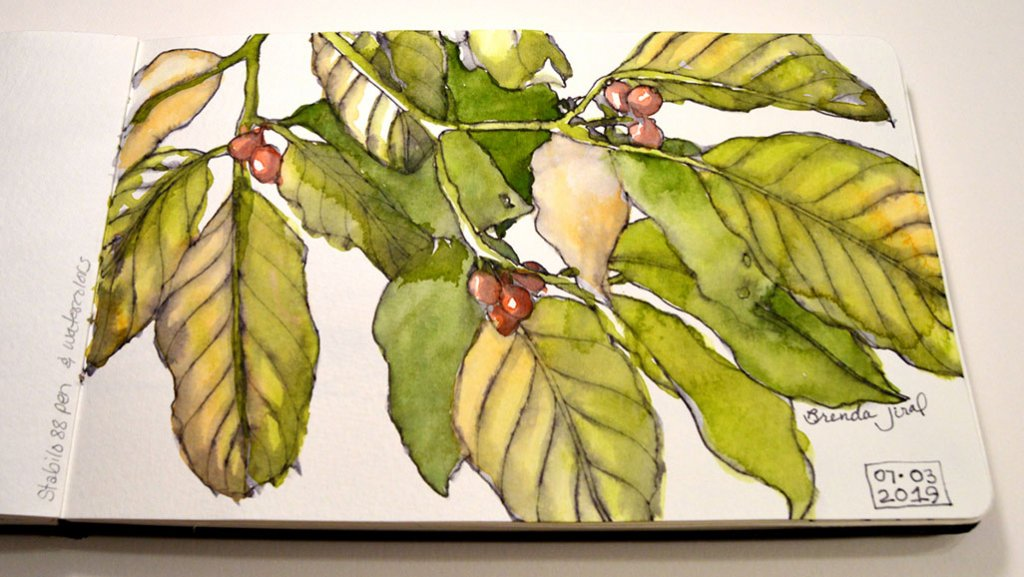 Dogwood Leaves Watercolor Sketch by Brenda Jiral