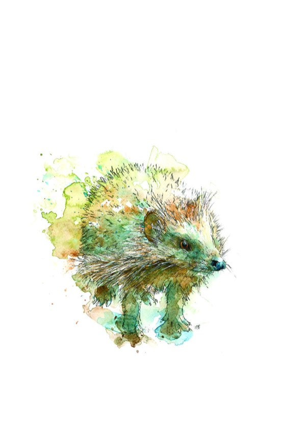 Hedgehog Watercolor Painting by Valerie de Rozarieux