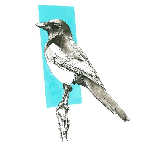 Magpie Drawing Ink Wash by Valerie de Rozarieux