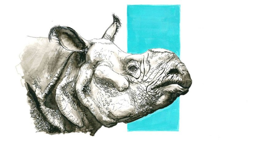 Rhino Drawing Ink Wash by Valerie de Rozarieux