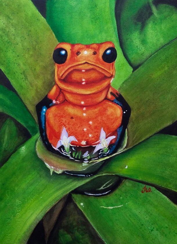 Frog Orange Watercolor Painting by Teresa Whyman