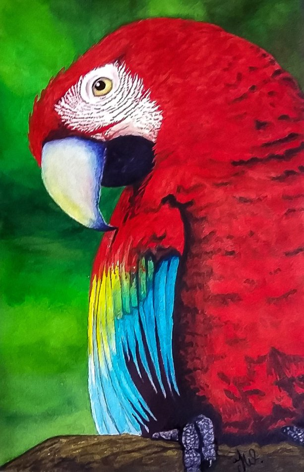 Parrot Watercolor by Teresa Whyman Tesartmania