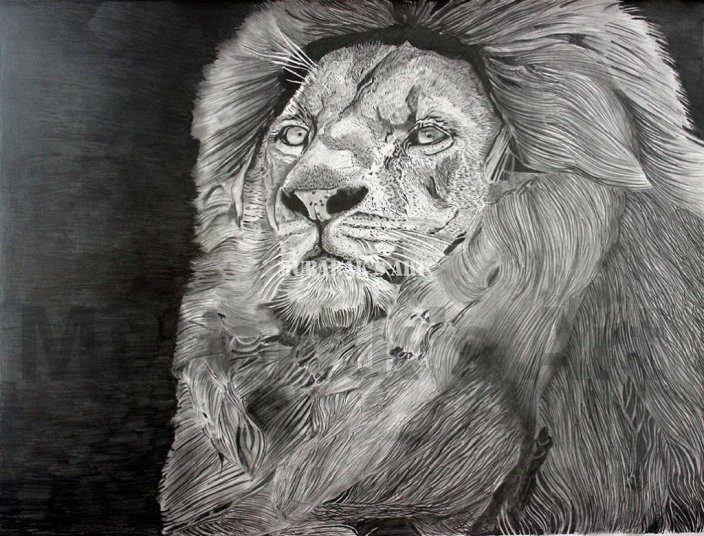 lion sketch the king of jungle