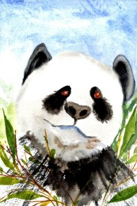 11/16/19 Panda 11.16.19 Panda img015