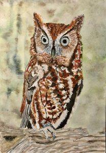 Une chouette chouette (owl) 737435F2-7E6A-4AA7-9B16-E5EABA05907D