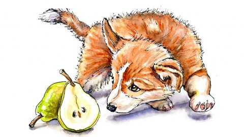 Corgi Puppy And Pear Watercolor Illustration