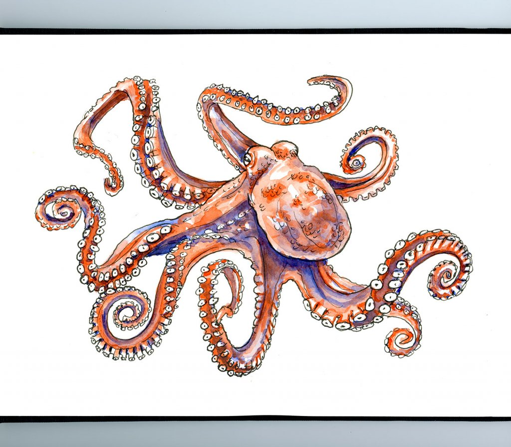Octopus Watercolor Illustration Sketchbook Detail