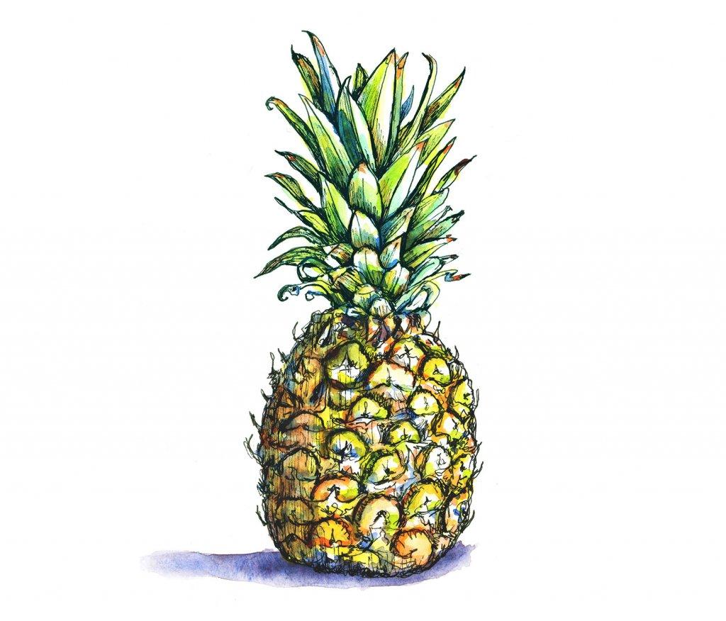 Pineapple Watercolor Illustration