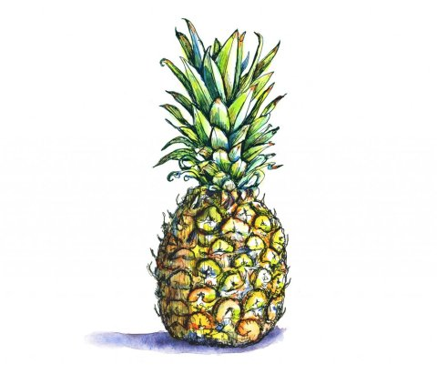 Pineapple Watercolor Illustration