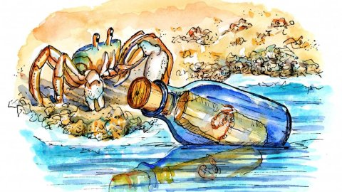Ghost Crab Message In A Bottle Watercolor Illustration