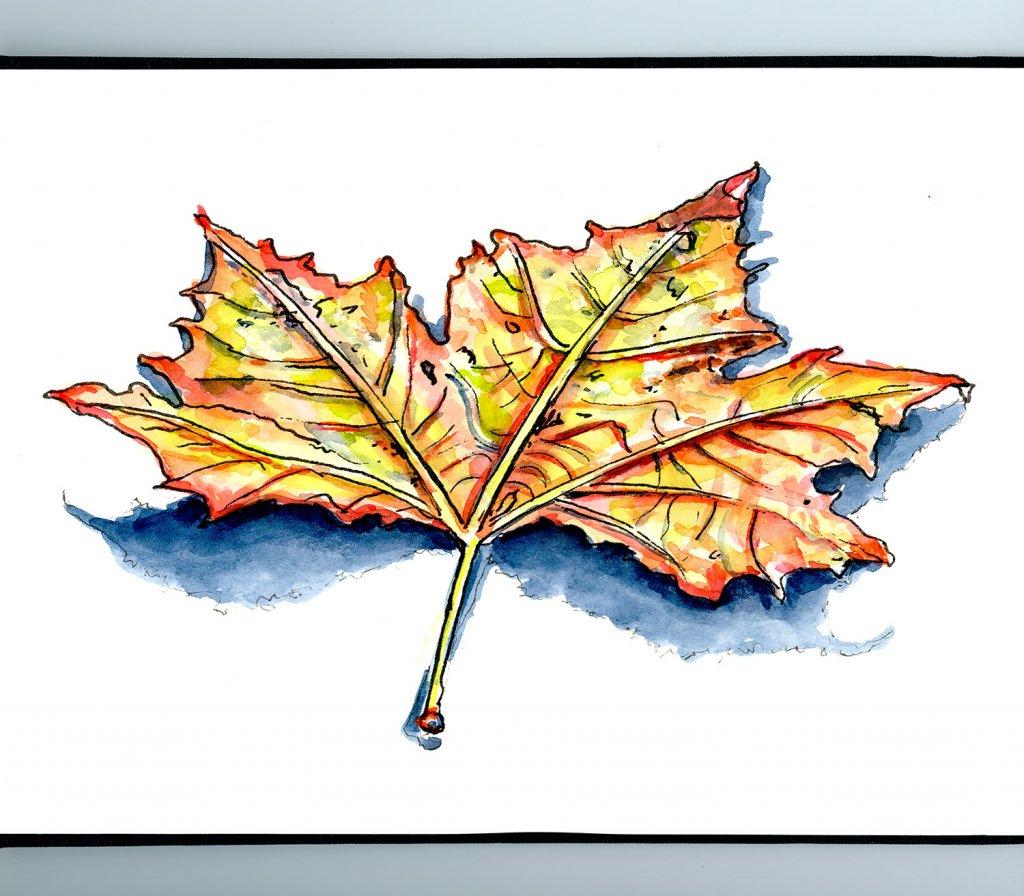 Autumn Fall Leaf Watercolor Illustration Sketchbook Detail