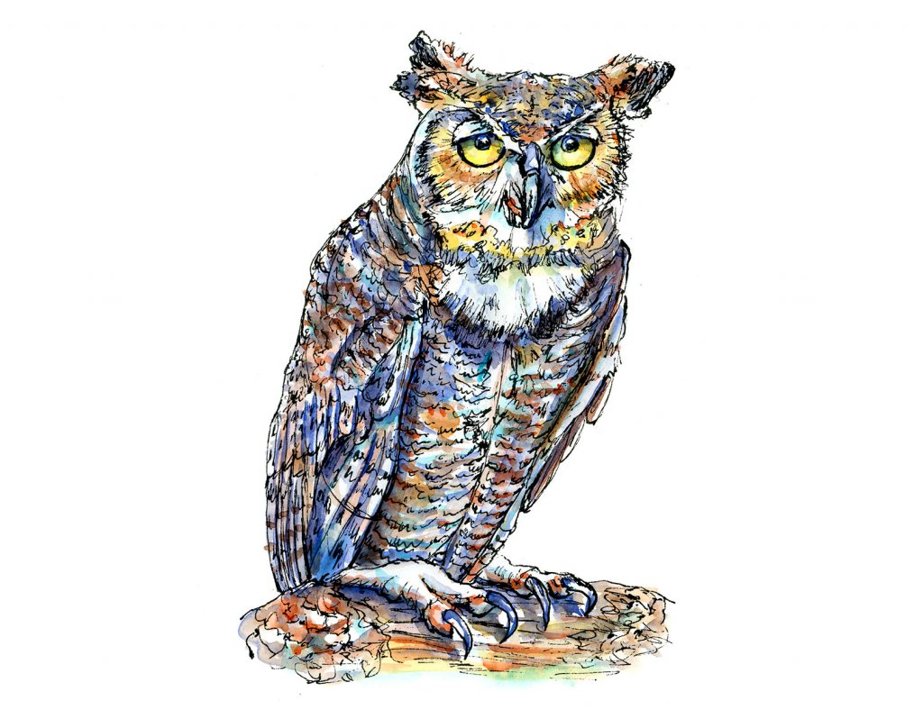 Owl Eyes Watercolor Illustration