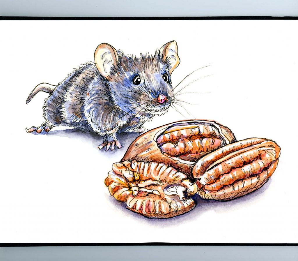 Mouse And Pecan Nuts Watercolor Illustration Sketchbook Detail