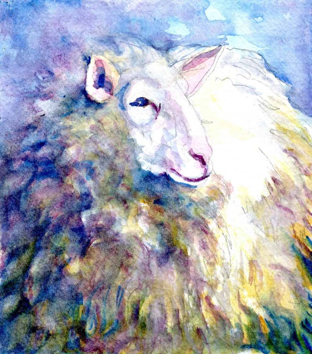 Final watercolor painting of Sheep