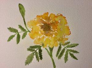 Marigold, after a tutorial by KeysinColor. 0BB7EDC7-B08F-4E80-B929-7A7ACBBDAC1B