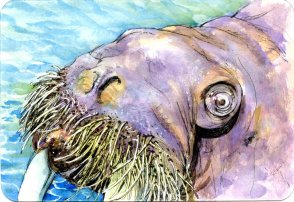 A Proliferation of Whiskers – #PencilToPaint Tutorial #PostcardsForTheLunchBag. Doodlewash Pro