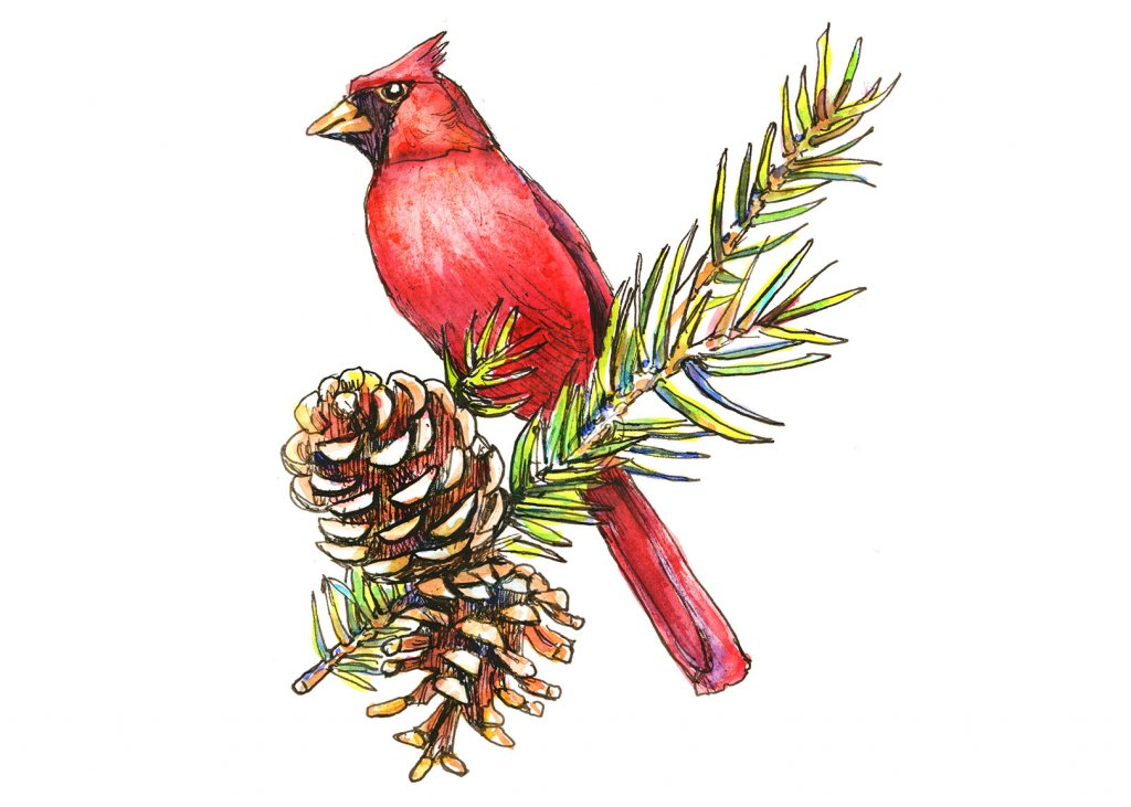 Cardinal Pine Cones Branch Watercolor Painting