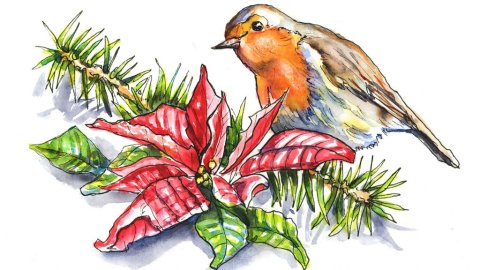 Poinsettia And English Robin Watercolor Illustration