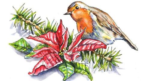 Poinsettia And English Robin Watercolor Illustration