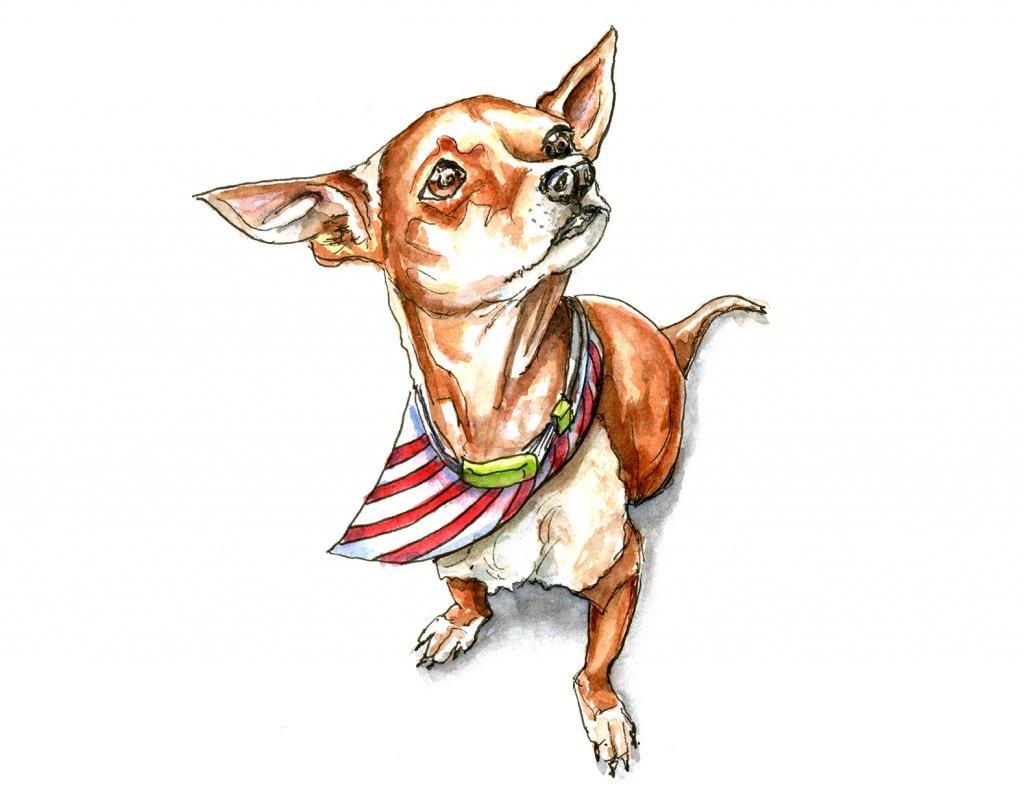 Chihuahua Dog Portrait Watercolor Illustration