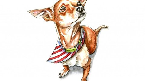 Chihuahua Dog Portrait Watercolor Illustration