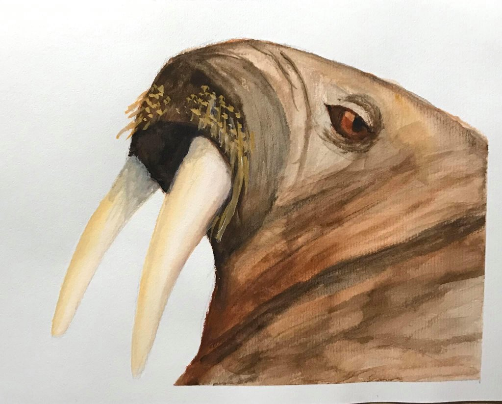 Dec. 14 gouache (prompt day 9 Walrus) Day14_9Walrus_gouache