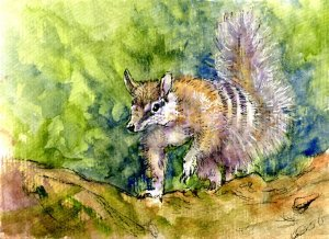 Numbat – Postcards for the Lunch Bag. Zebra Zensation Technical Pen & QoR Watercolor on Hahnem