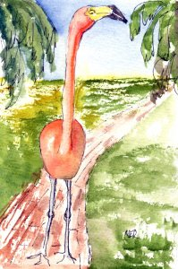 1/24/20 Flamingos I spent a delightful morning at the Sarasota Jungle Gardens recently. The gardens
